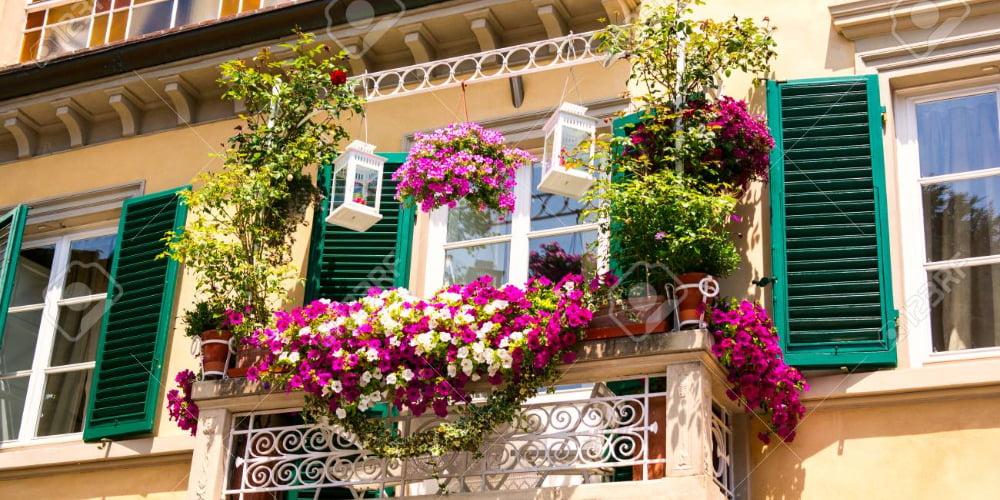 8 plante ușor de întreținut potrivite pentru balcon și terasă