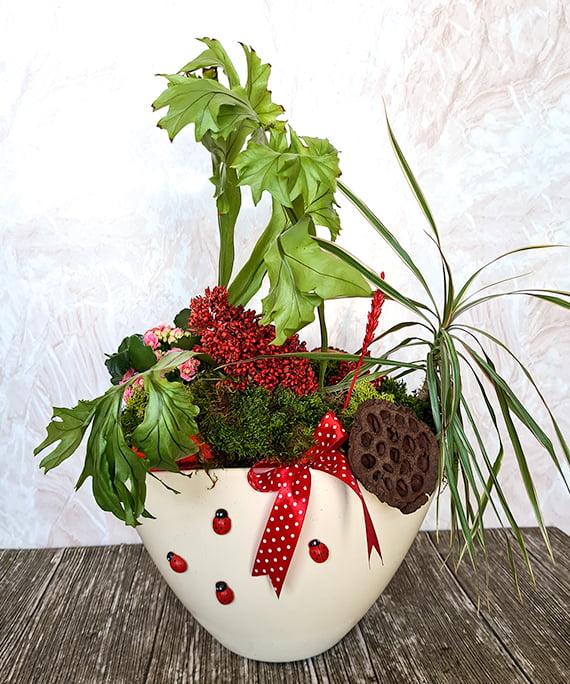 Plante de camera in vas ceramic 1
