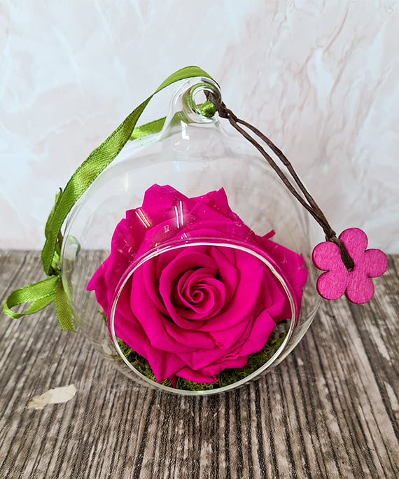 Trandafir criogenat ciclam in glob 1