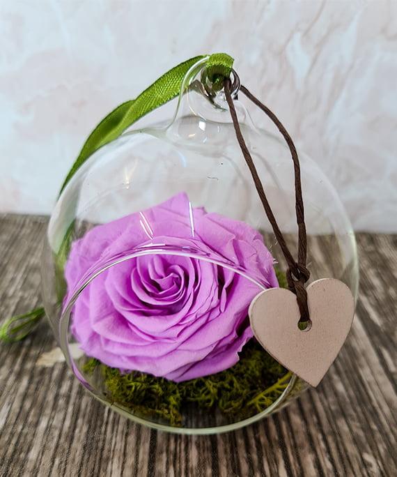 Trandafir criogenat mov in glob 1