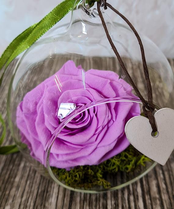 Trandafir criogenat mov in glob 2