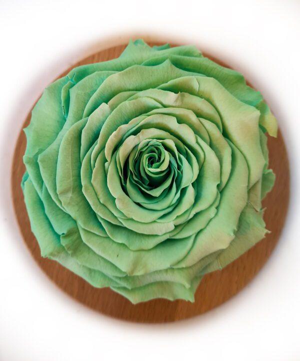 Trandafir criogenat turcoaz 4