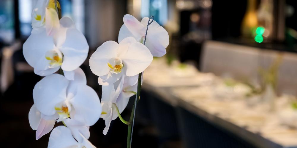 Orhideea simbolul perfecțiunii 1